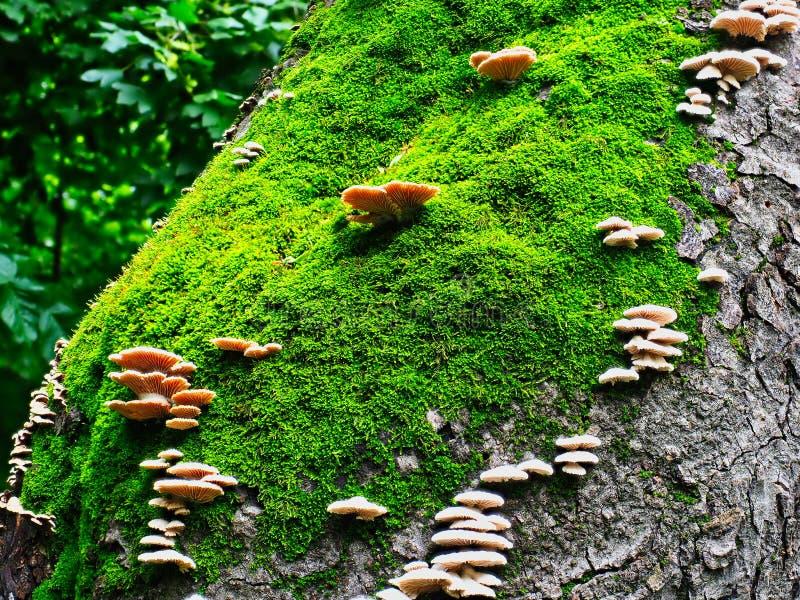 Грибки и мох растя на старом дереве стоковое изображение