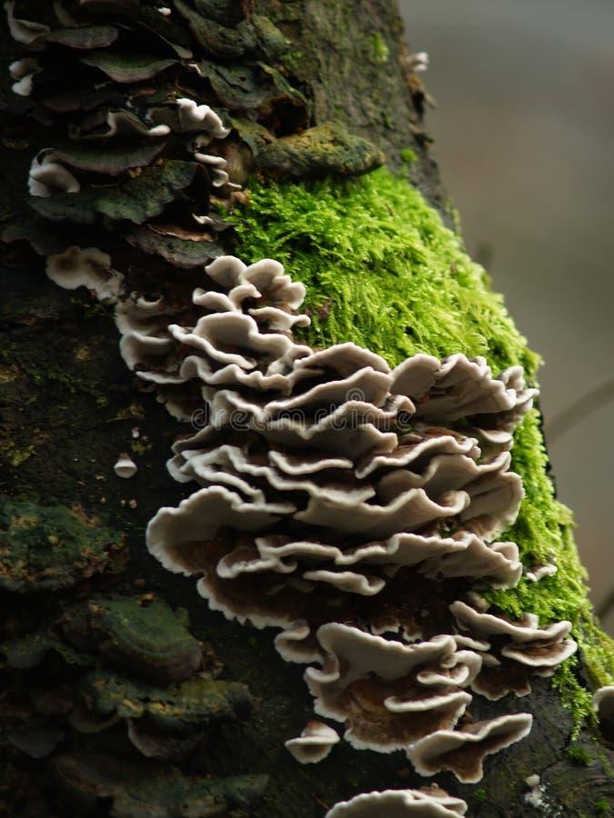 грибки одичалые стоковое фото