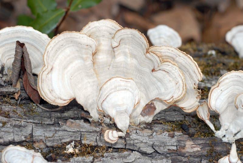 грибки стоковое фото rf