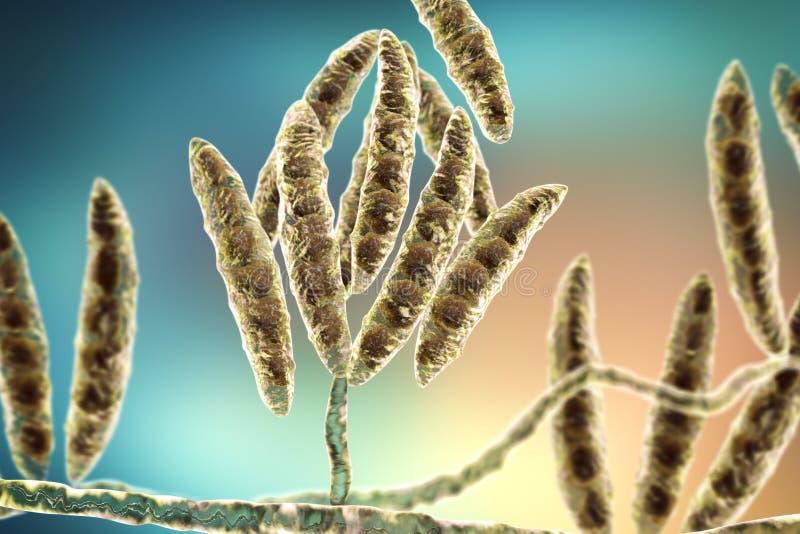 Грибки Fusarium которые производят микотоксины бесплатная иллюстрация