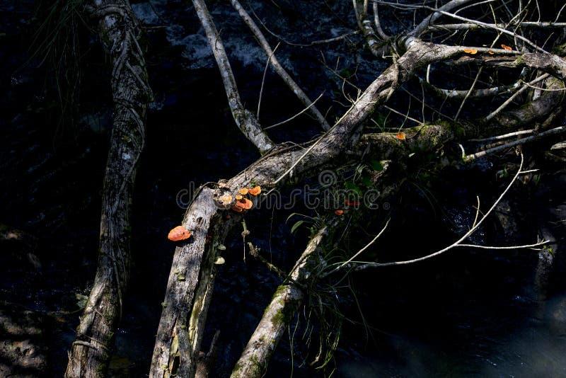 Грибное дерево стоковое изображение rf