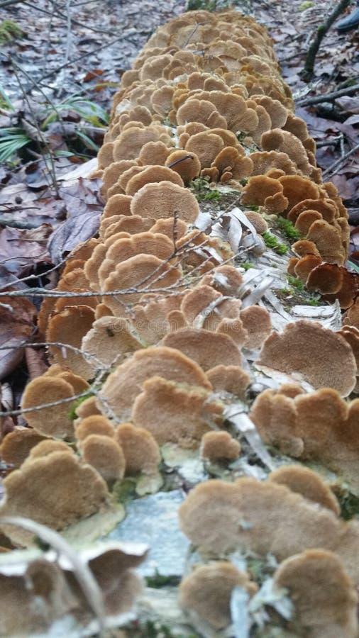 грибной журнал стоковые фотографии rf