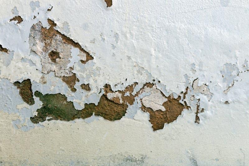 Грибок зеленой прессформы и краска шелушения и шелушиться стоковое изображение