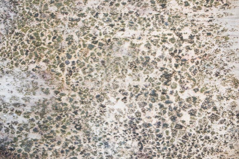 Грибок на древесине стоковое изображение