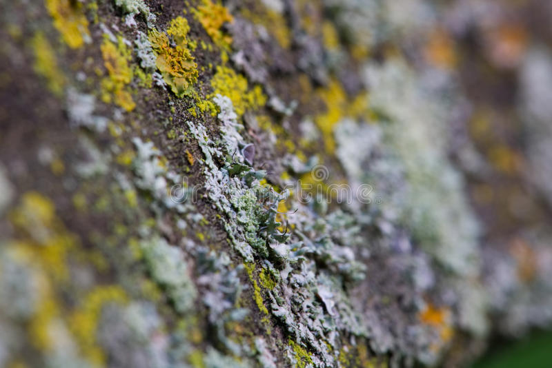 грибок стоковые фотографии rf