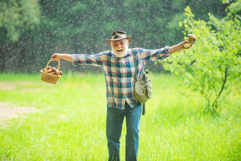 Грибы в деде дождливого леса счастливом с грибами в busket охотясь гриб стоковое фото