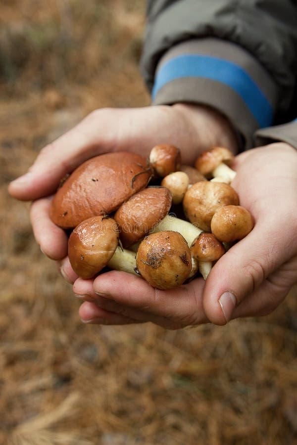 грибы в ладонях стоковые изображения