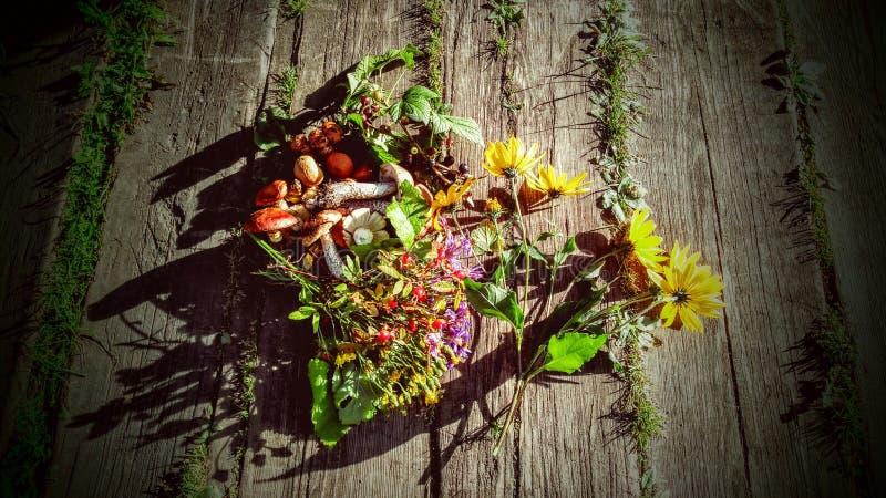 грибы и цветки ягод стоковые фото