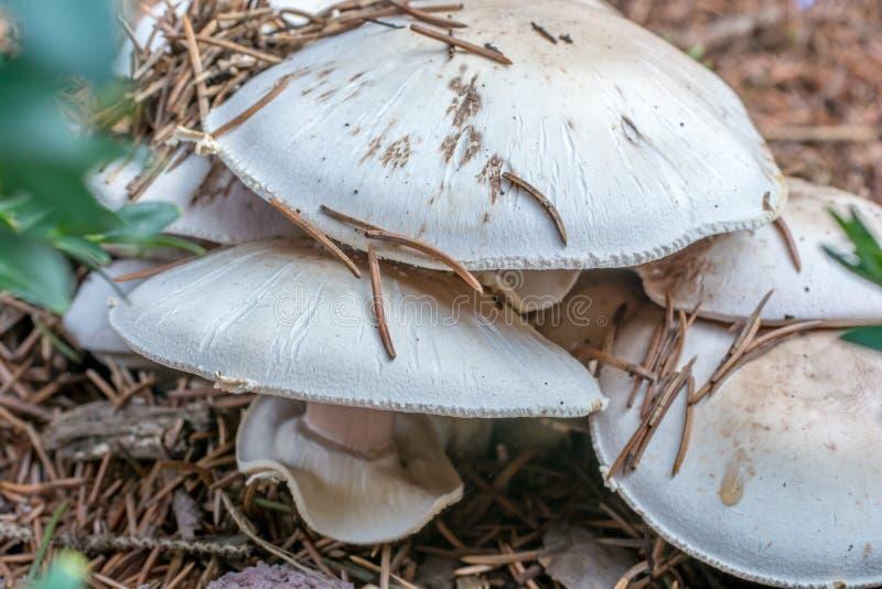 Грибы открытые в середине леса во время охоты гриба стоковое изображение rf
