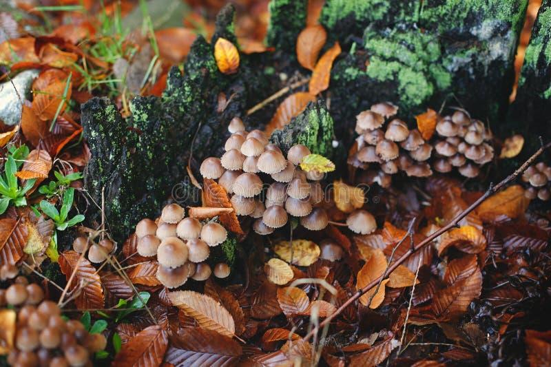 Грибы среди красочных листьев стоковое изображение