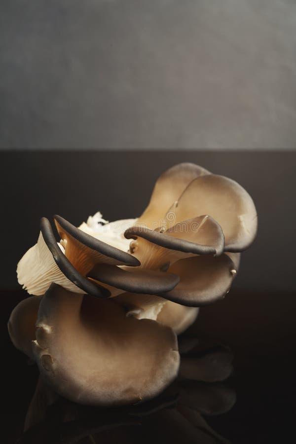 Грибы устрицы на черной предпосылке стоковое фото rf