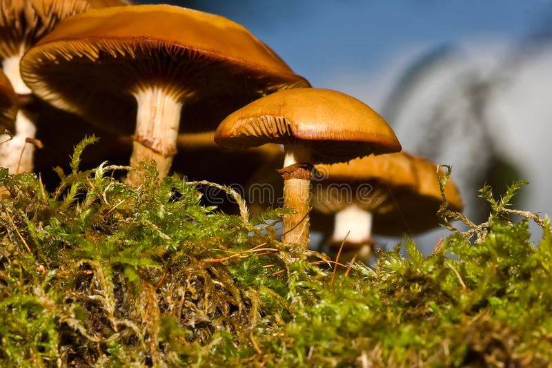 грибы стоковые изображения
