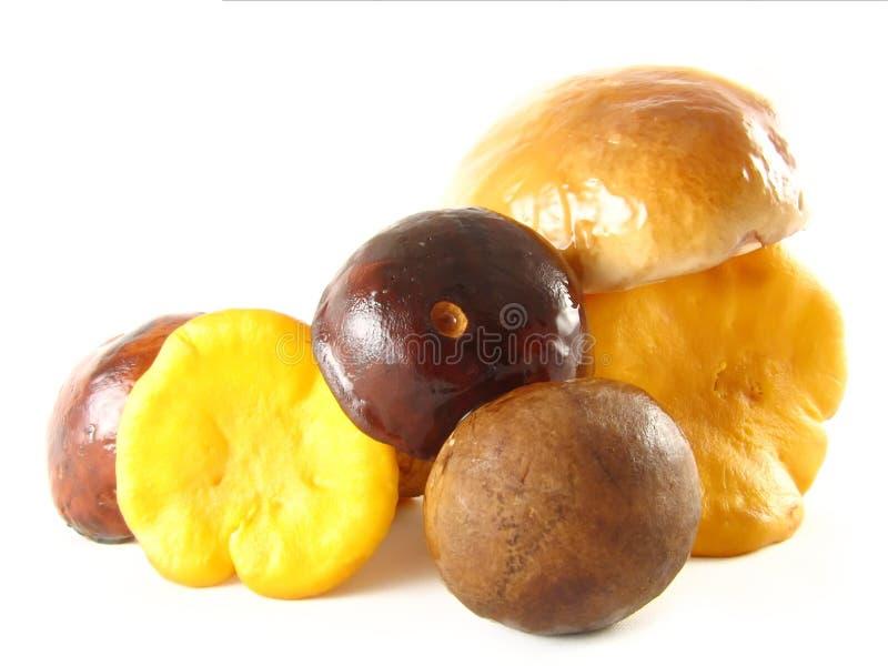 грибы стоковые фотографии rf