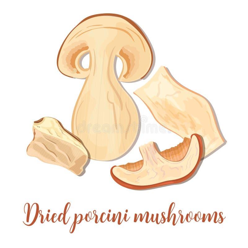 Грибы Porcini или подосиновик edulis, плюшка пенни, CEP, porcino Съестной грибок, высушенный гриб porcini иллюстрация вектора