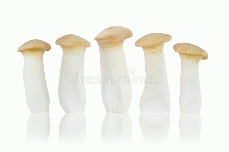 Гриб короля устрицы изолированный на белой предпосылке стоковая фотография rf