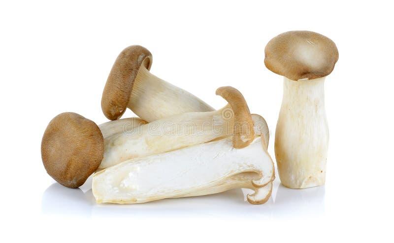 Гриб короля устрицы изолированный на белой предпосылке стоковое фото rf