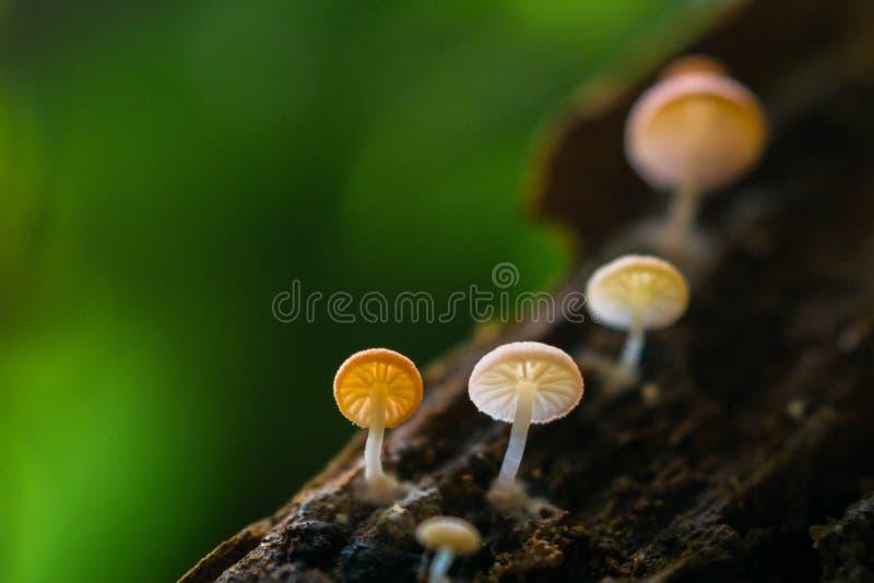 гриб малюсенький стоковая фотография rf