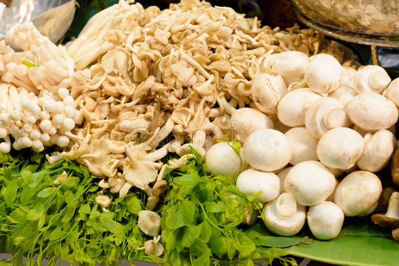 Гриб устрицы и свежие грибы champignon стоковое изображение rf