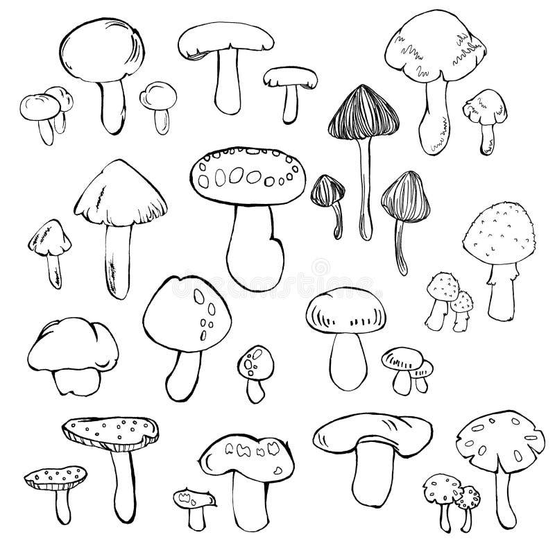 гриб иллюстрация вектора