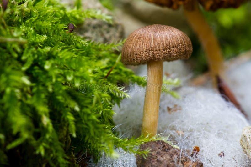 гриб стоковые изображения rf