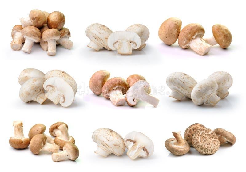 Гриб Champignon и гриб шиитаке изолированный на белом ба стоковое изображение rf
