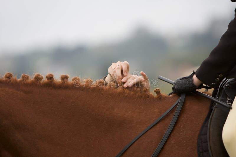 грива лошади стоковое фото rf