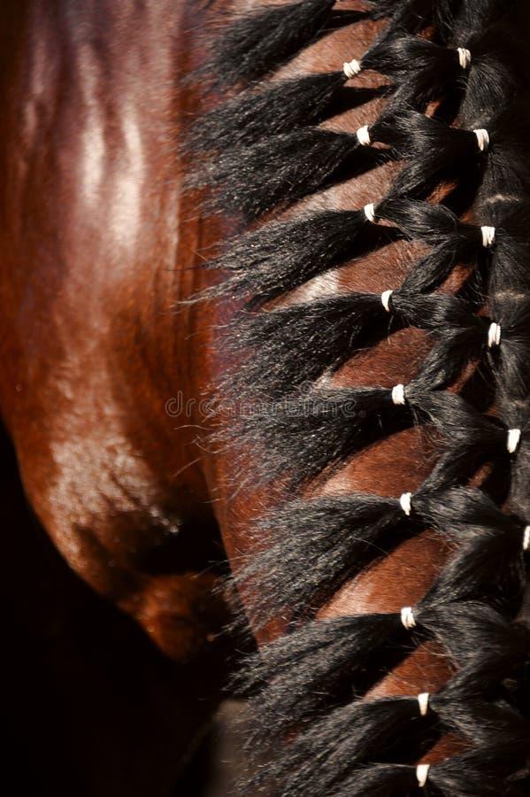 грива s лошади стоковое фото rf