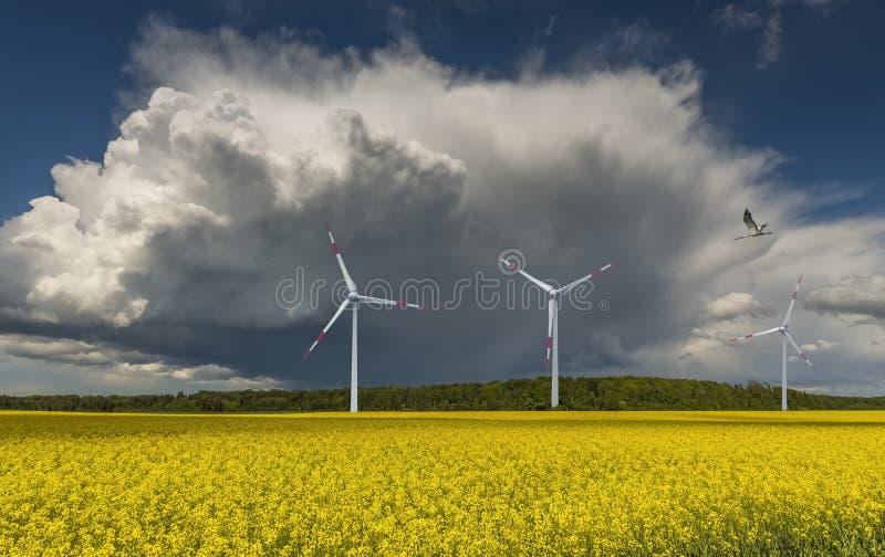 Гроза причаливая полю с blossoming рапсом стоковая фотография rf