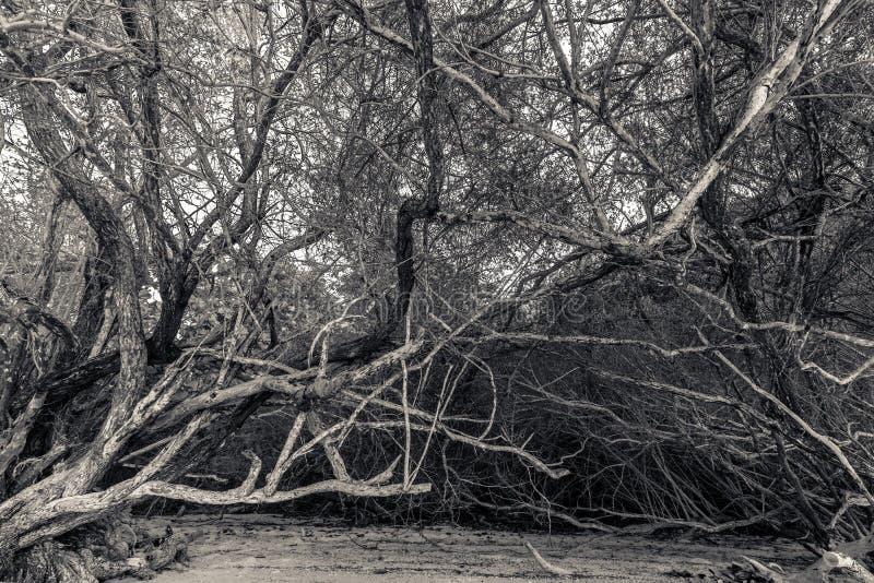 Грозные тропические деревья стоковые фото