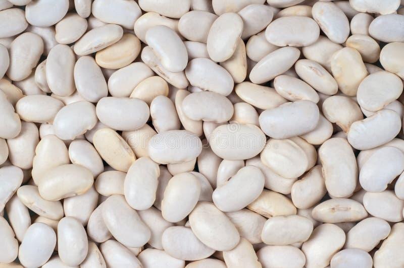 Громоздк-бел-фасоли стоковая фотография rf