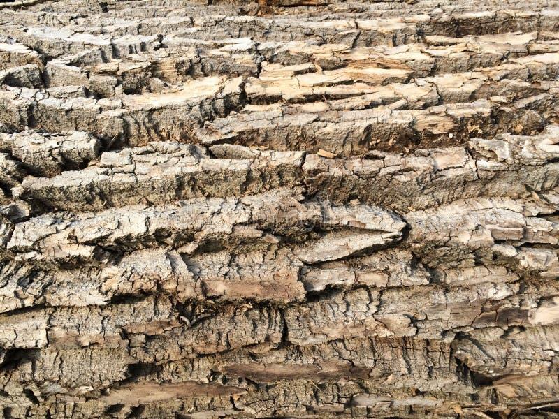 Грубая кора дерева древесины текстуры стоковые фото