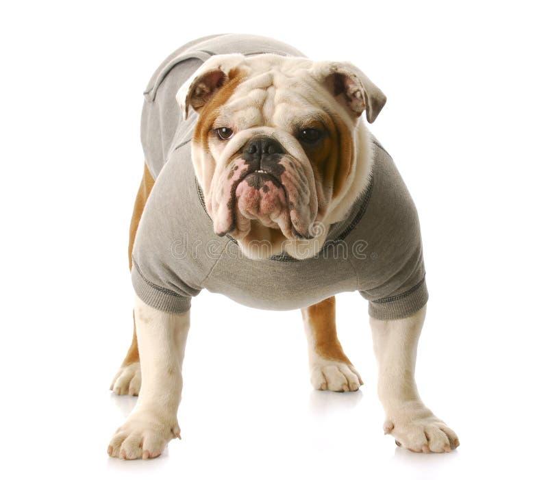 Грубая собака стоковое изображение