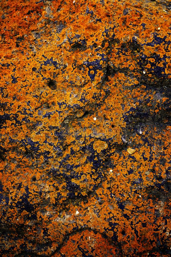 Грубая текстура утеса с ростом лишайников ржавчины старым стоковое фото