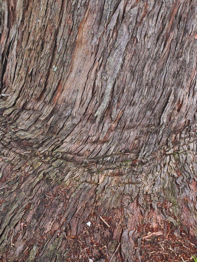 Грубо текстурировал картину коры, Сидней, Австралию стоковая фотография