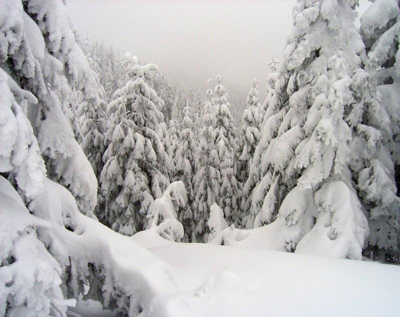грубые древесины зимы стоковое фото