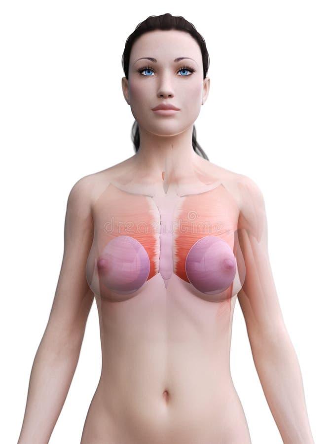 грудные имплантаты женщины иллюстрация штока