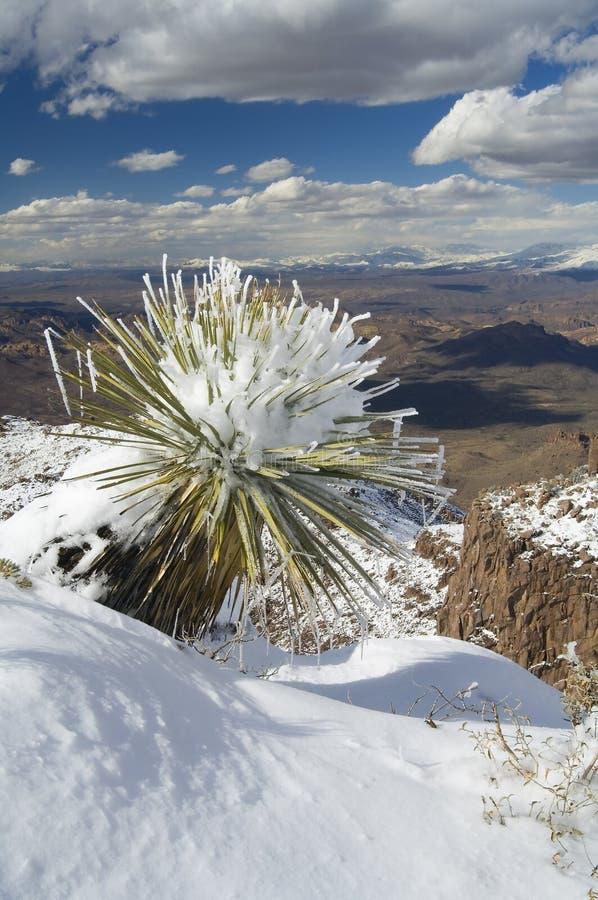 гружёная юкка снежка стоковые изображения