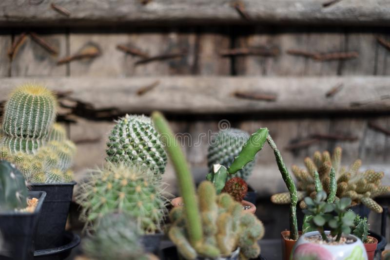 Группа в составе баки кактуса стоковое фото