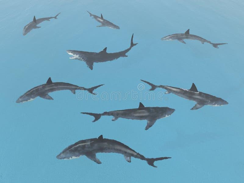 Группа в составе большие белые акулы иллюстрация штока
