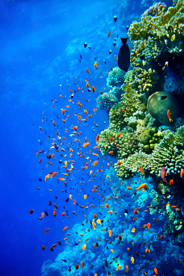 Группа в составе вода рыб коралла. стоковые фото