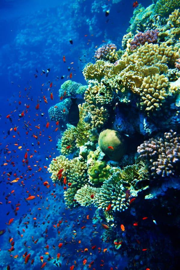 Группа в составе вода рыб коралла. стоковые изображения