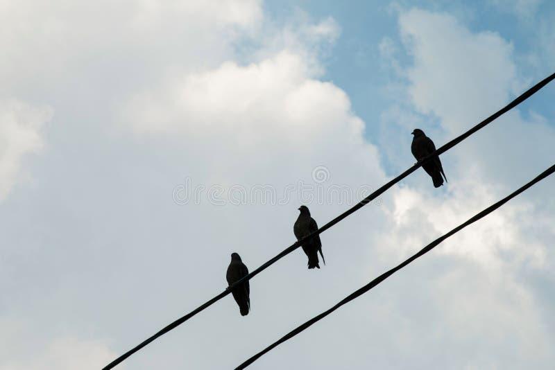 Группа в составе голуби на линии электропередач стоковая фотография rf