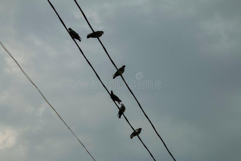 Группа в составе голуби на линии электропередач стоковые фотографии rf