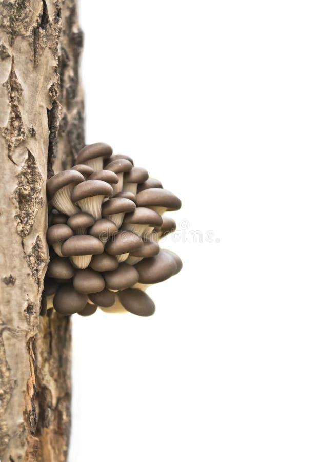 Группа в составе грибы на старой древесине стоковая фотография rf