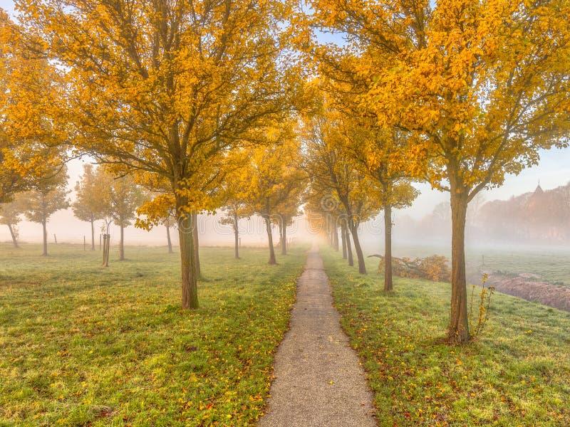Группа в составе деревья с желтыми листьями осени стоковые фотографии rf