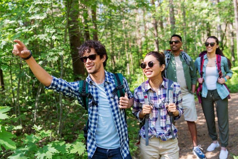 Группа в составе друзья с рюкзаками в лесе стоковые фотографии rf