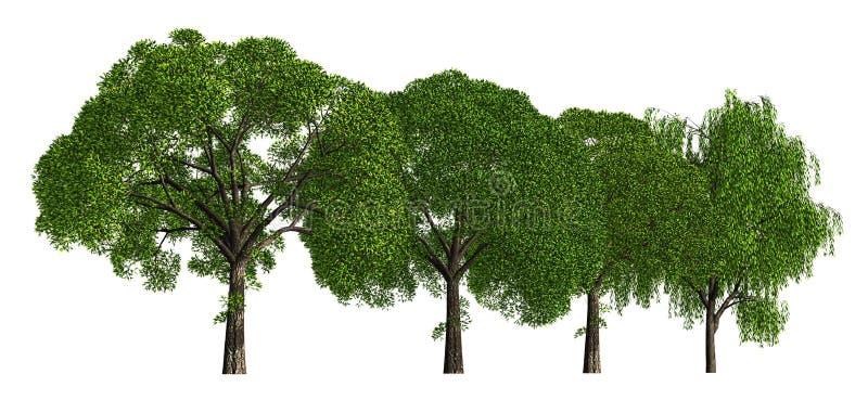 Группа в составе деревья изолированные на белой иллюстрации 3d иллюстрация вектора