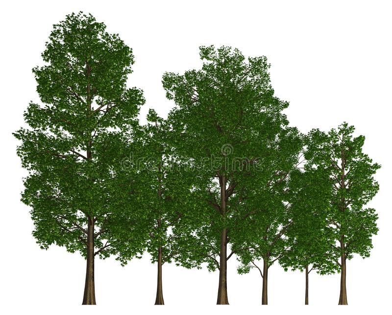 Группа в составе деревья изолированные на белой иллюстрации 3d иллюстрация штока