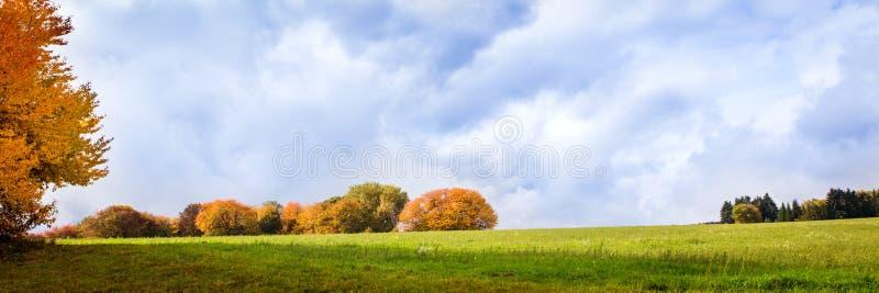 Группа в составе деревья на сезоне осени стоковое изображение