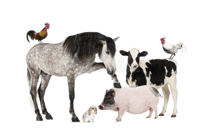 Группа в составе животноводческие фермы стоковое изображение
